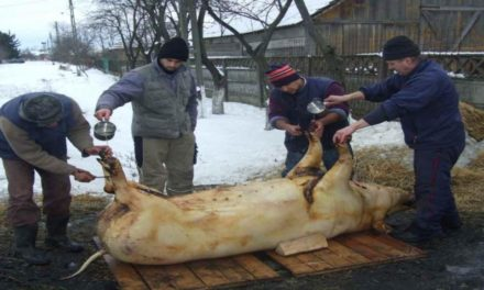 Amenzi Uriașe În România Pentru Sacrificarea Porcului În Curte!