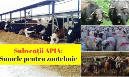 Vin banii de la APIA! S-au stabilit sumele pentru ANT bovine și ovine