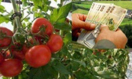 Programul TOMATE 2019 – HG nr. 107 / 01.03.2019 *3000 euro / an pentru cultura de tomate !