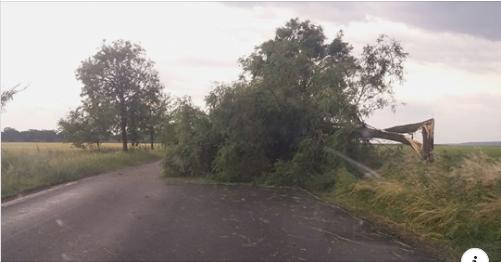 Circulatie-blocata-la-iesirea-din-botosani-din-cauza-unor-copaci-cazuti-pe-carosabil