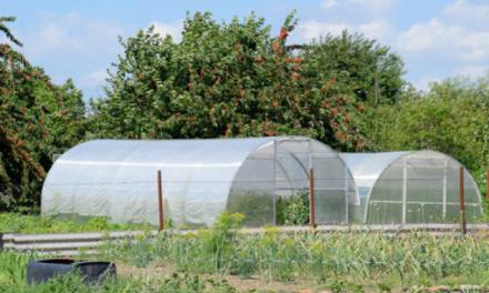 Programul PRIMUL SOLAR: Fiecare familie va primi BANII pentru construcția unui solar de legume