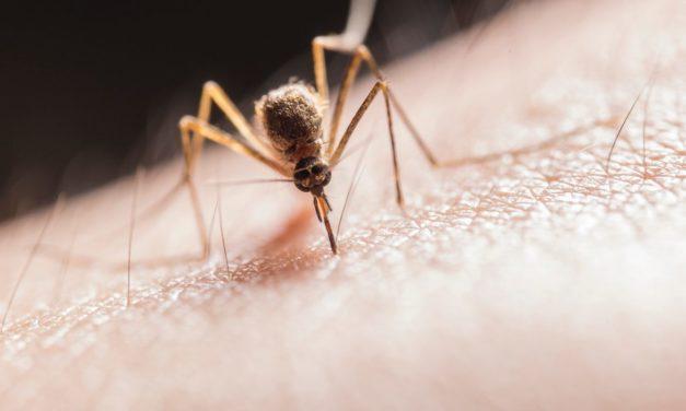Soluții practice de combatere a țânțarilor