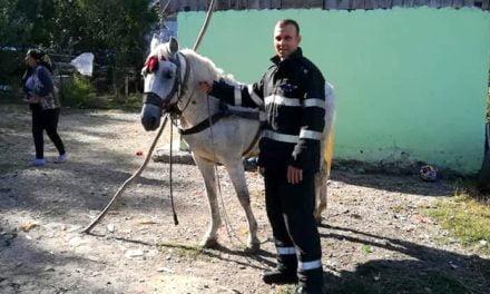 Cal salvat dintr- un beci adânc de cca. doi metri la Baranca Hudesti