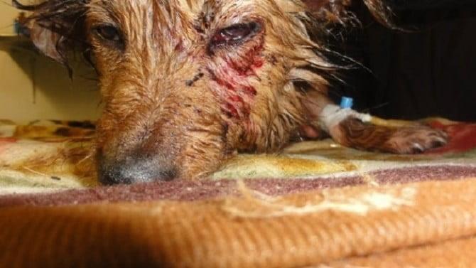 Senatul a votat închisoare de la 2 la 7 ani pentru cei ce omoară și chinuie animale