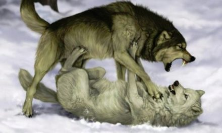 Legenda celor doi lupi. O vei citi in cateva secunde, dar iti va ramane in minte toata viata!