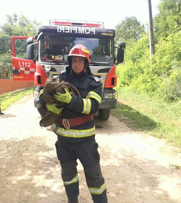 Pui de barză salvat de pompierii din Dorohoi